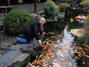 Шанхай золотые рыбки